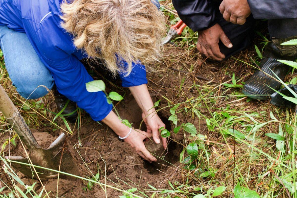 Eerste bomen Plan Boom in de grond