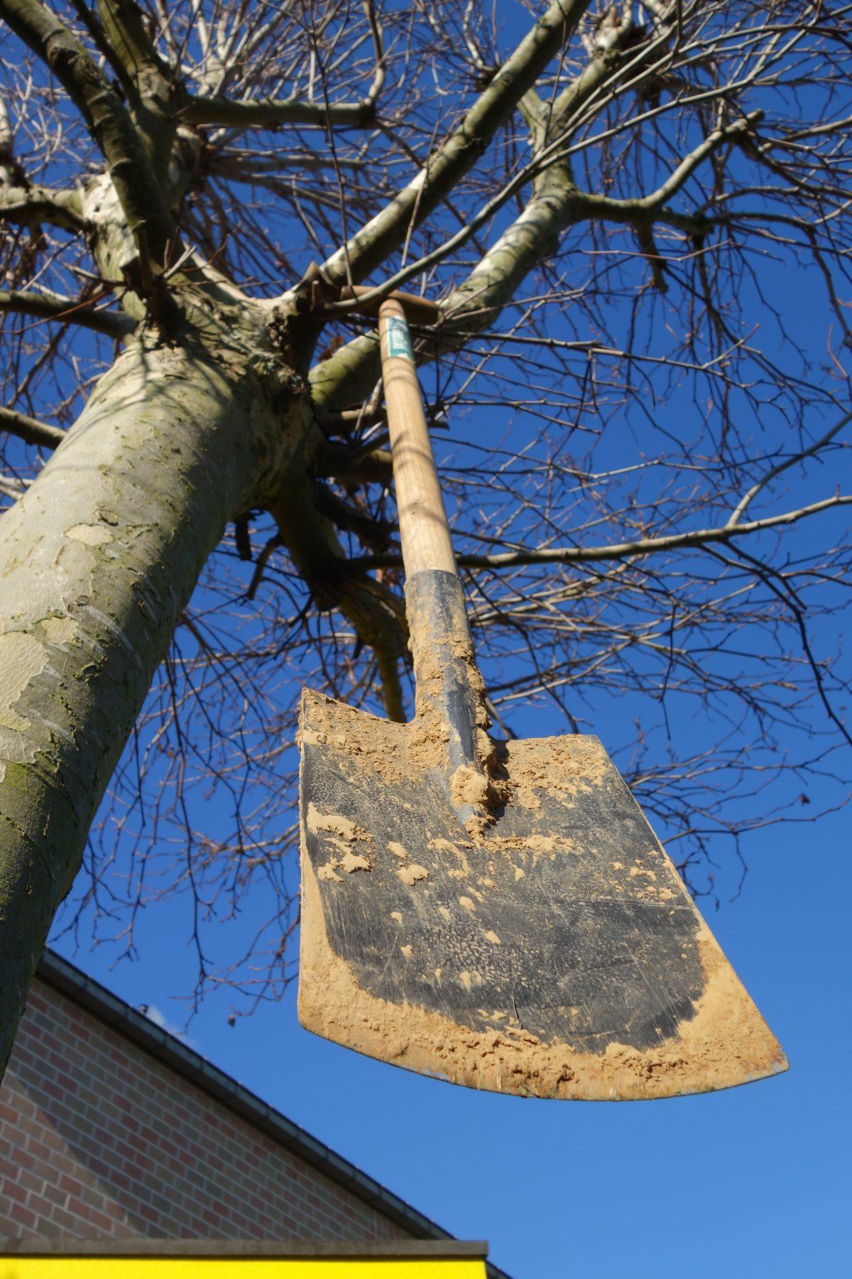 Waterschap Scheldestromen schenkt 4 bomen per school