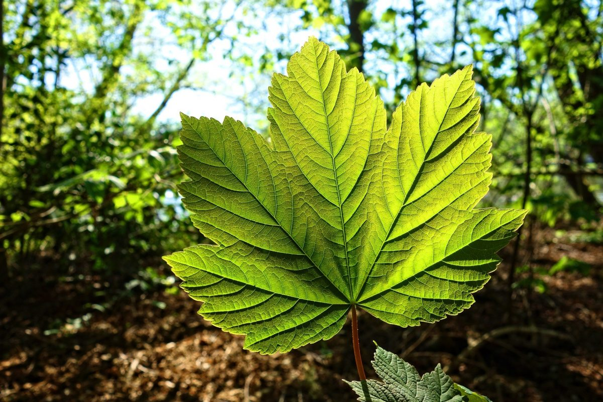 Het bedrijf Boom plant 500 bomen in Meppel als relatiegeschenk