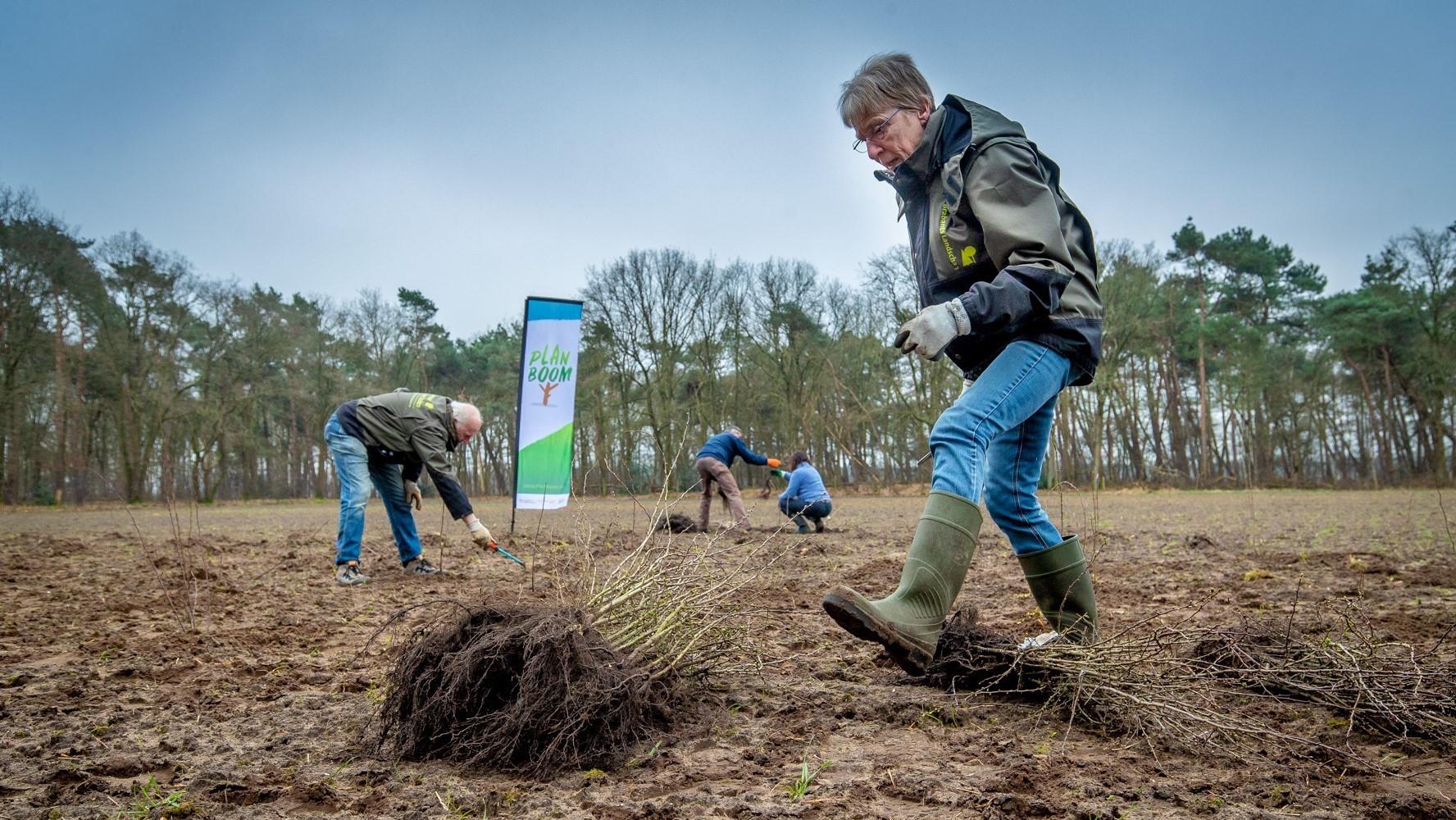 Vrijwilligers van IVN Veldhoven Eindhoven Vessem planten ruim 325 jonge bomen, foto: BMF, Erik van der Burgt