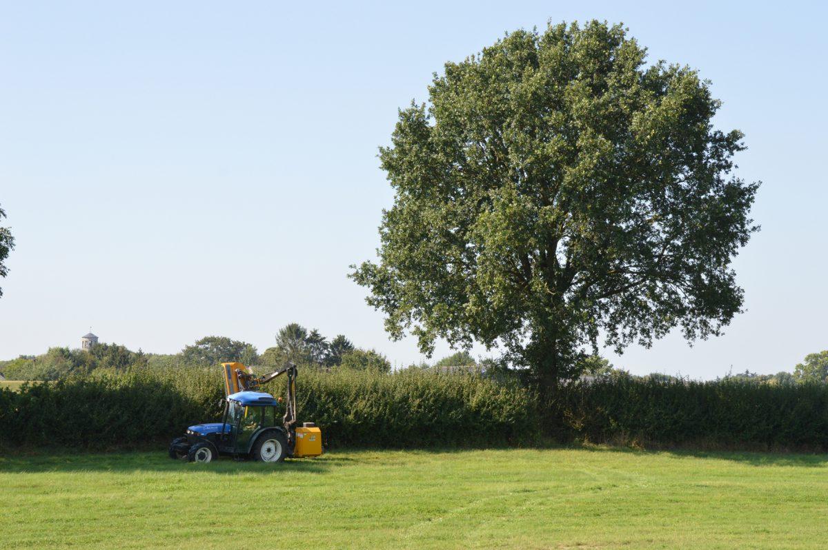 Geen plek? Plant een boom in een heg of houtwal